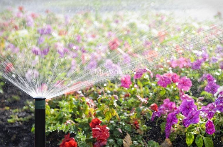 regar-plantas-flores-jardin-consejos