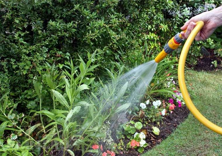 regar-plantas-flores-jardin-mejor-consejos