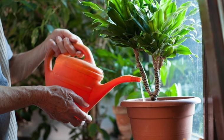 riego de plantas