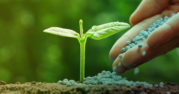 cafe para las plantas fertilizantes (1)
