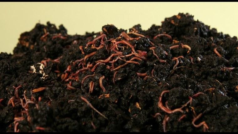 cafe para las plantas gusanos