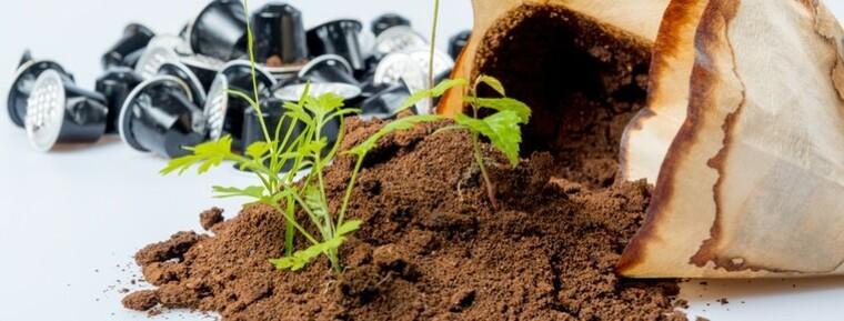 cafe para las plantas presentacion planta (1)