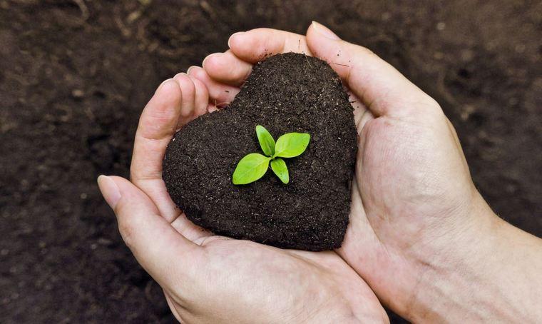cafe para las plantas salud vegetal