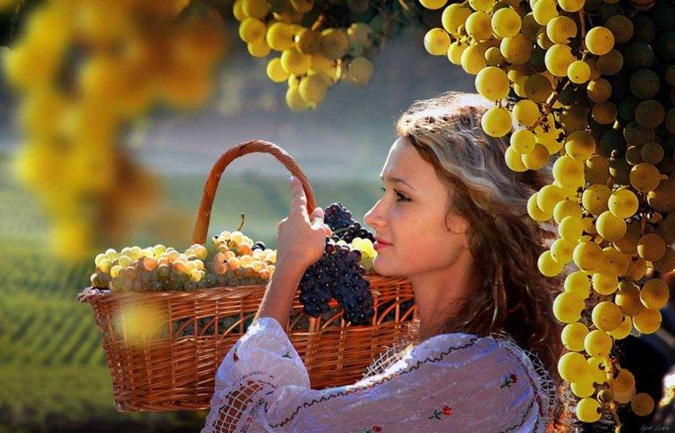Variedades de uva en Moldavia