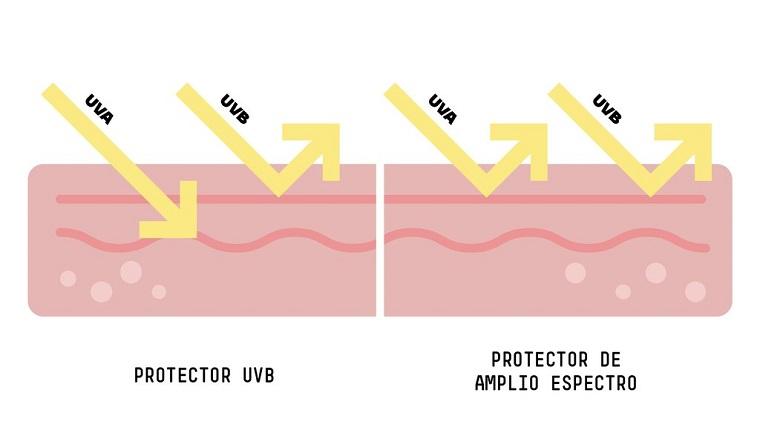 como los rayos uv penetran en la piel