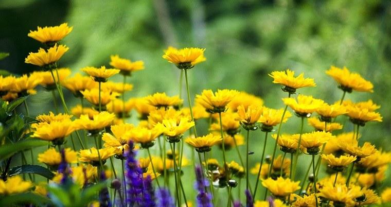 flores-de-verano-consejos-ideas