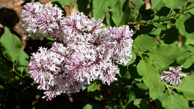 flores-de-verano-consejos-lila