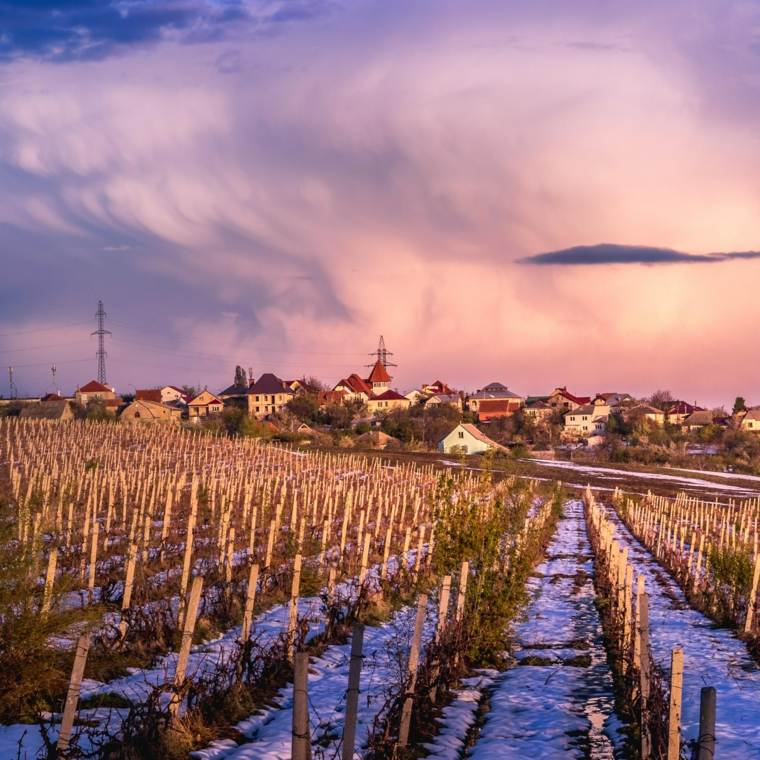 viñedos de Moldavia