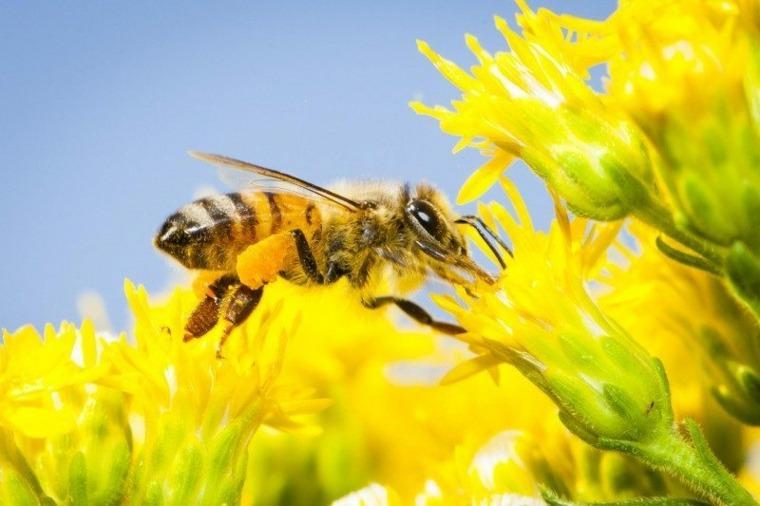 ¿El calentamiento global es en parte el culpable de las muertes de abejas?