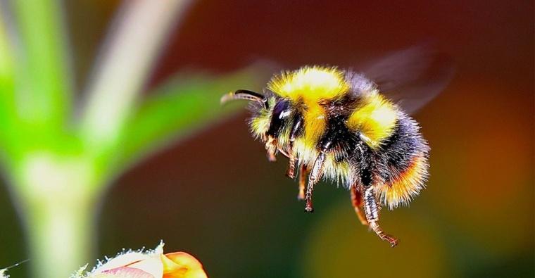 Holanda cuida las abejas