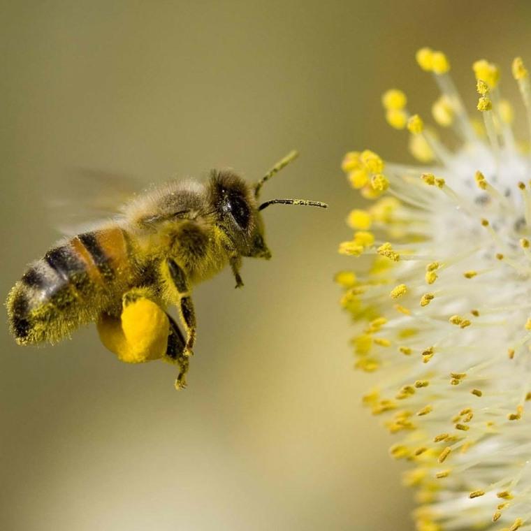 La radiación puede empujar a las abejas fuera de curso