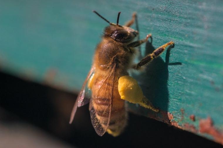 El cambio climático y los efectos de la contaminación en las abejas