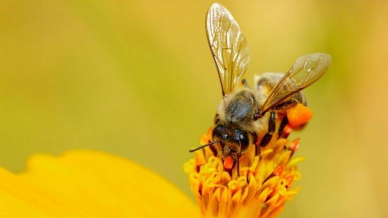 Terribles consecuencias de la desaparición de las abejas