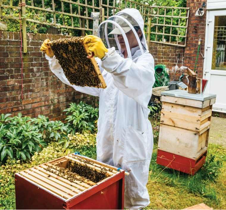 Soluciones que salvan a las abejas