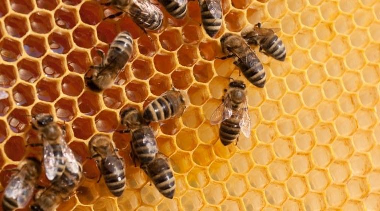 Los científicos siguen buscando la causa del trastorno del colapso de la colonia de abejas melíferas