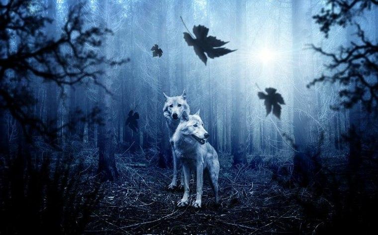 lobos en Asia