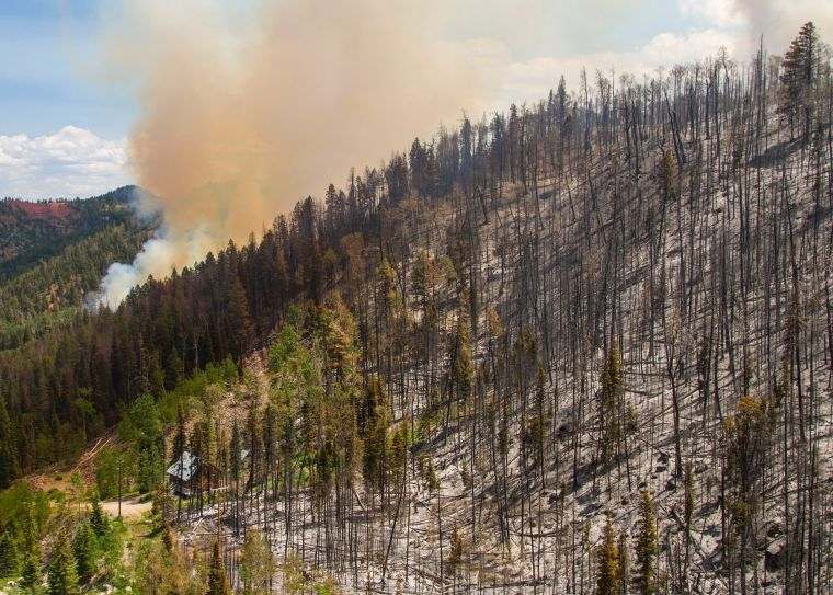 causas de los incendios forestales daño