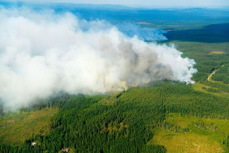 causas de los incendios forestales fronteras