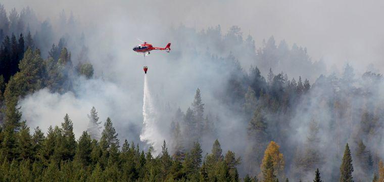 causas de los incendios forestales fuego2