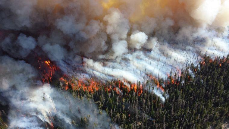 causas de los incendios forestales grande