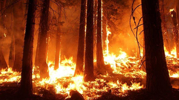 causas de los incendios forestales incendio