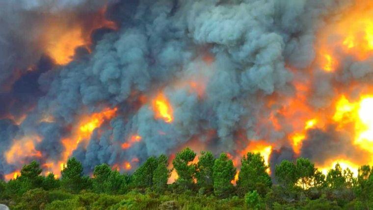 causas de los incendios forestales mucho
