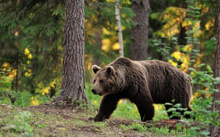 causas de los incendios forestales oso
