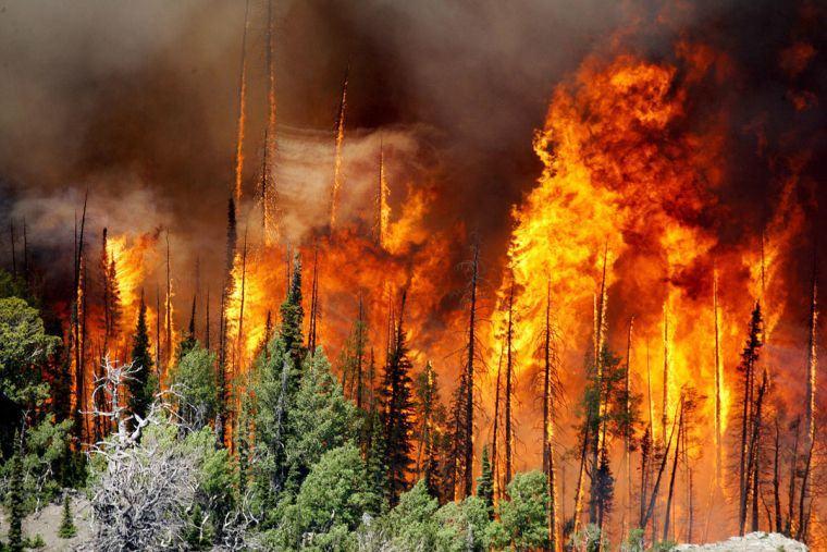 causas de los incendios forestales present