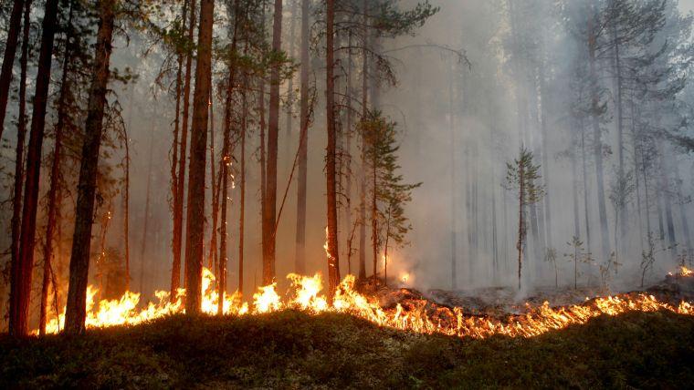 causas de los incendios forestales quema