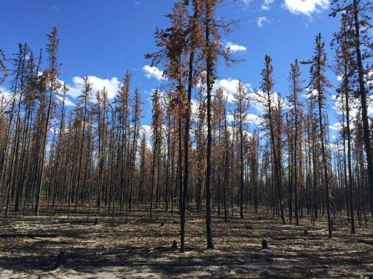 causas de los incendios forestales sequia