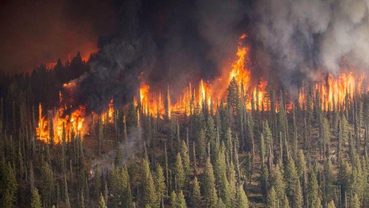 causas de los incendios forestales siberia