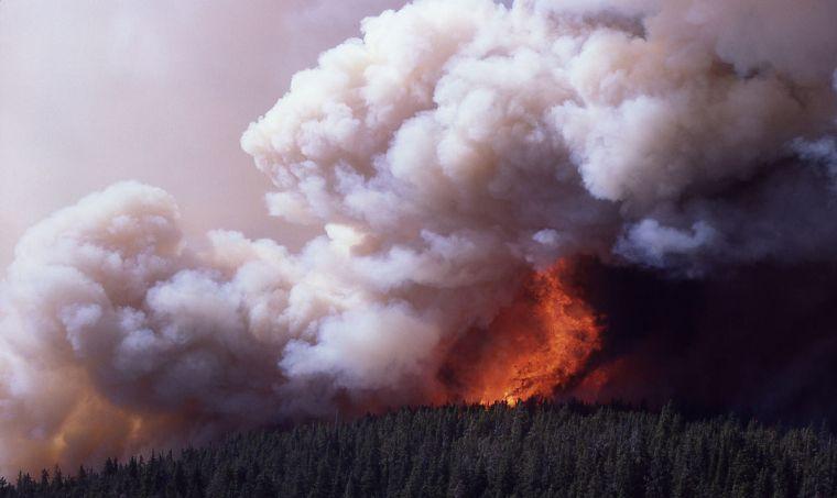 causas los incendios forestales grave