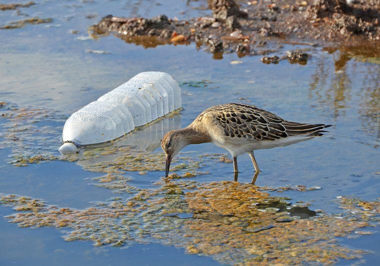 el plastico peligro