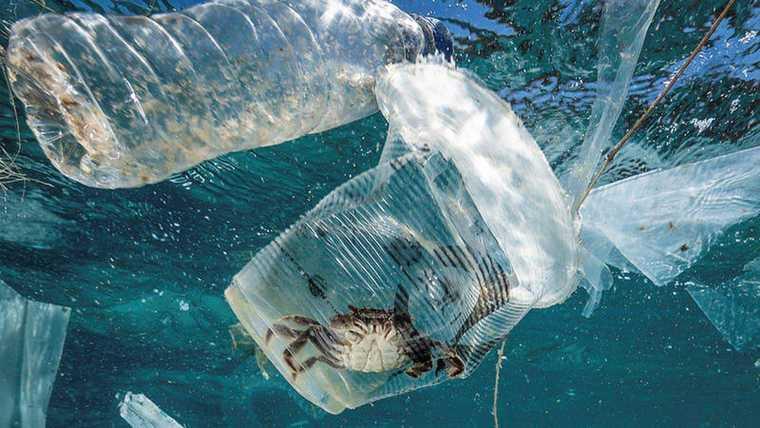 el plástico vida marina