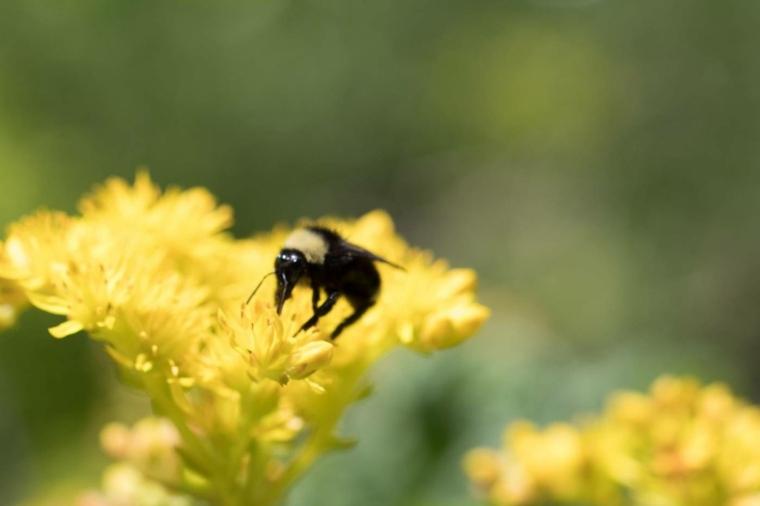 cuidar abejas