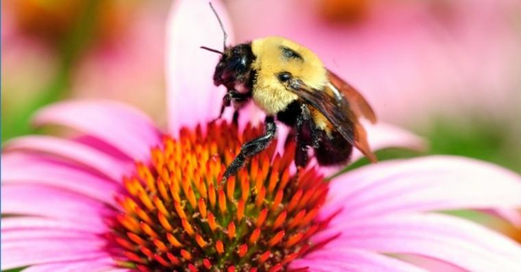 Ácaros asesinos y abejas