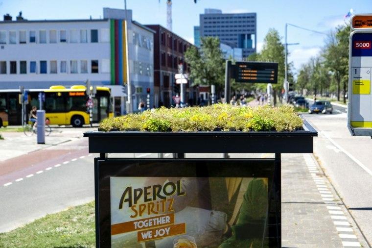 Holanda cuida de las abejas