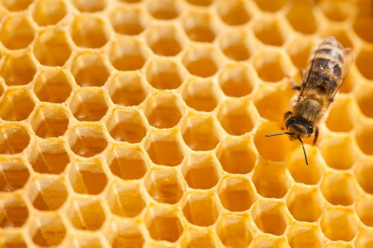 Soluciones para salvar a las abejas