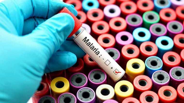 mosquito común malaria