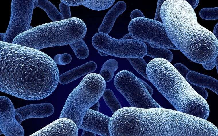 onicofagia bacterias microscopica