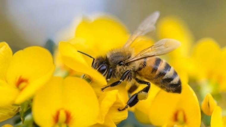 Los productos químicos pueden estar matando a las abejas