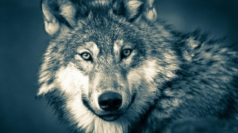 Interpretación del sueño del lobo
