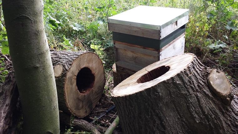 abejas melíferas-comonias-nidos