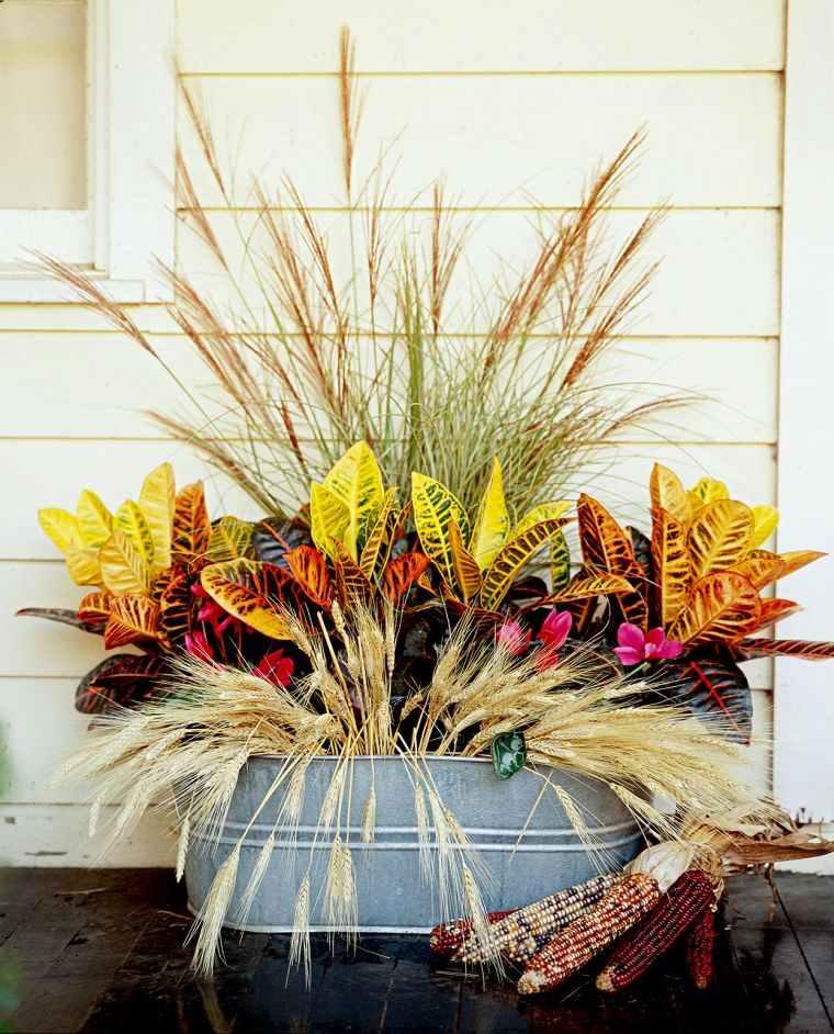 colores de otoño espigas