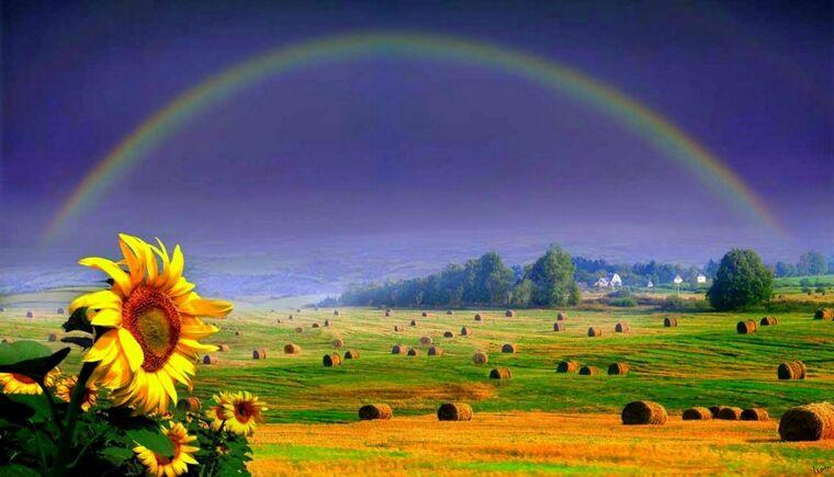colores del arcoiris flor