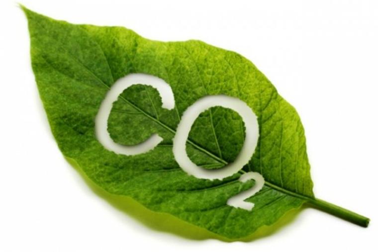 Oxígeno de plantas