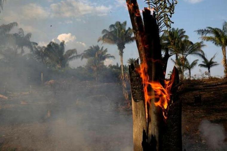 incendio selva
