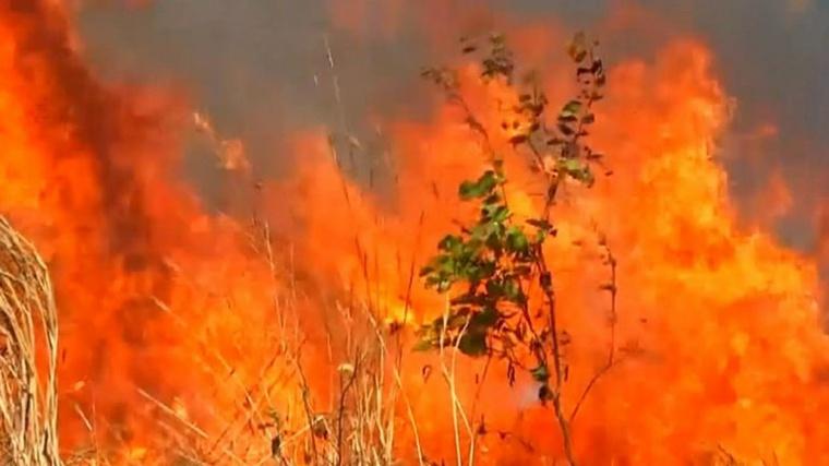 selva ardiendo