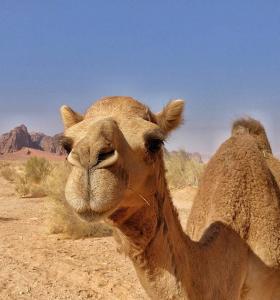 leche-de-camello-tendencia-salud
