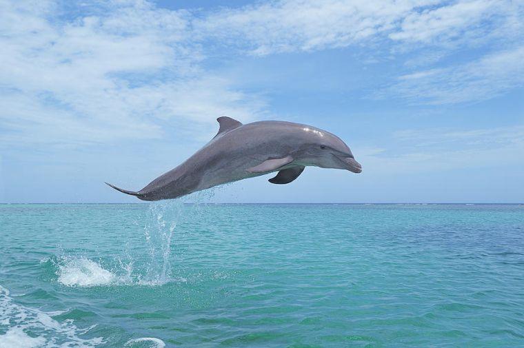 norte magnético delfin